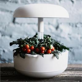 גינה חכמה בעלת אפשרות גידול של 6 צמחים במקביל בצבע לבן תוצרת  PLANTUI