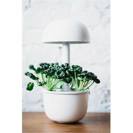גינה חכמה המכילה 3 קפסולות זרעים מבית PLANTUI בצבע לבן